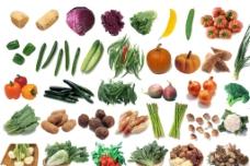 蔬菜大全图片