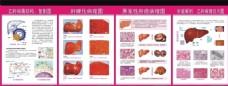 肝病科解剖图