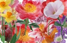 各种分层花朵图片