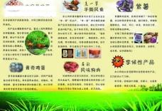 黄色 宣传单 三折页 农副产品 鸡蛋 鸡图片
