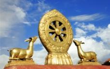 藏羚羊图片