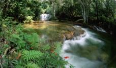 森林流水图片