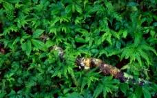 丛中蟒蛇图片