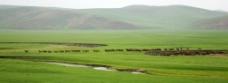 呼倫貝爾草原風光图片
