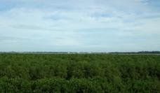 电白水东湾红树林图片