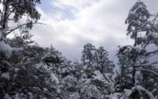 雪之金華山图片