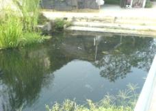 污染的小溪图片