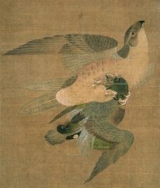 鹰攫图图片