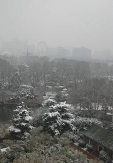 落雪无情图片