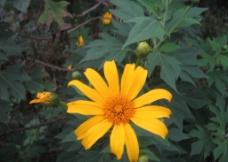 太阳花素材图图片