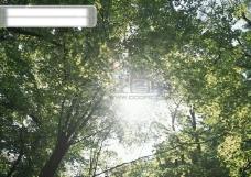 树林里的天空