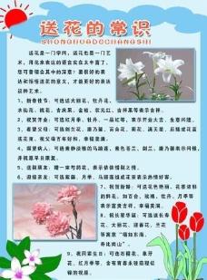 送花的常识图片