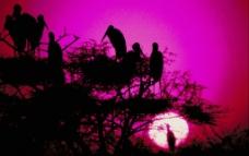黄昏时候的鸟图片