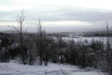 冬天里的树林图片