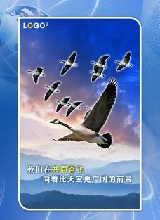 大雁团队共同奋飞图片