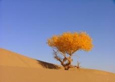 额济纳的大漠 胡杨 戈壁 红柳图片