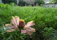 花朵之美图片