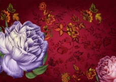 合成花卉图片