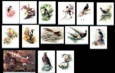 分层百鸟图图片