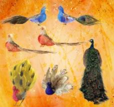 孔雀分層圖圖片
