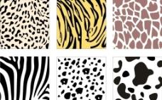 动物纹理图片